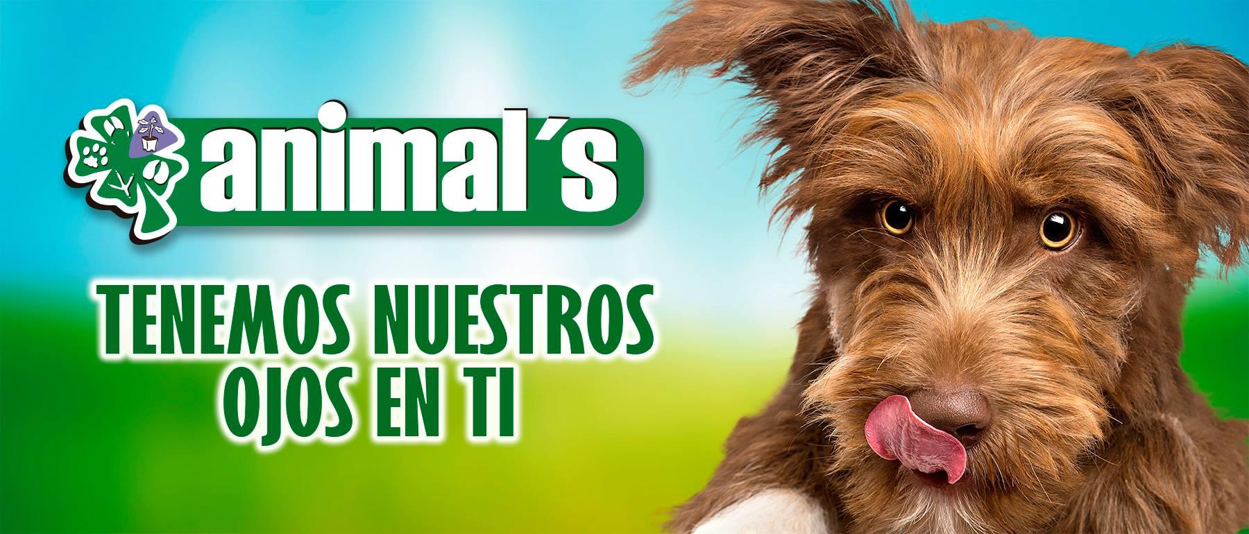 veterinaria y petshop en petlist.co